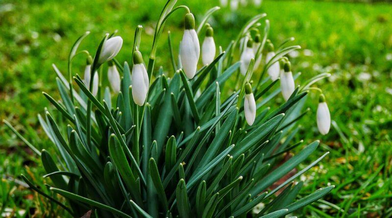 Der Frühling schickt seine Vorboten nach Haan