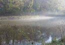 Nebelschwaden über der Düssel