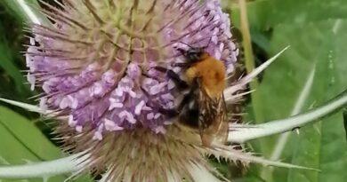 Bienensaison geht zu  Ende